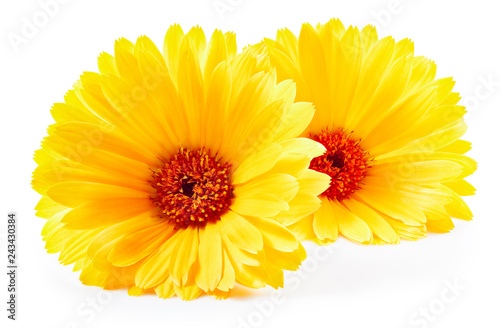 Fotografía  Marigold flower isolated
