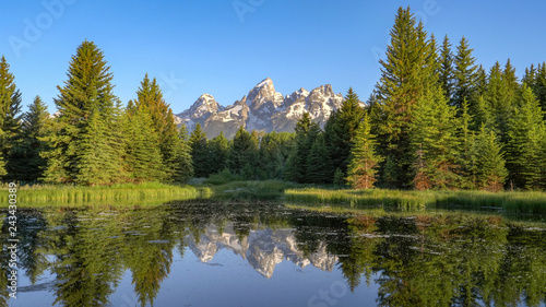 Fotografia, Obraz a morning view of grand teton and pine trees beside a pond at schwabachers landi