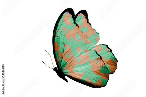 Foto auf AluDibond Schmetterlinge im Grunge military butterfly. isolated on white background