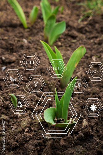 Smart farming with IoT, futuristic agriculture concept, cultivating ecological a Wallpaper Mural