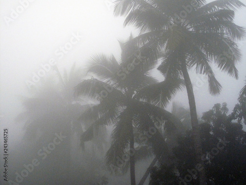 Fotografie, Obraz  Misty morning in the Bengal countryside in Sundarbans jungle area, West Bengal,