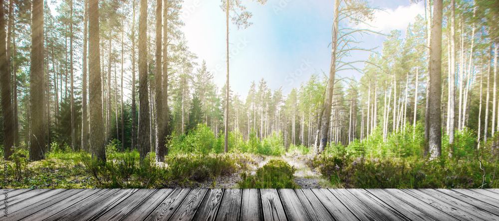 Fototapety, obrazy: Road in summer forest