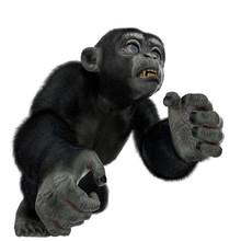 Baby Chimpanzee Cartoon In A W...