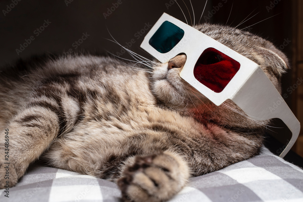 Funny scottish fold cat wore 3D glasses and watching a movie on the television set, resting on the couch
