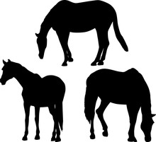 Three Black Horses Silhouettes Isolated On White