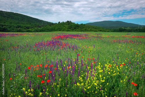 Spring flowers in field. Beautiful landscape. Composition of nature