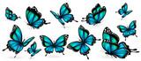 Fototapeta Motyle - beautiful blue butterflies, isolated  on a white