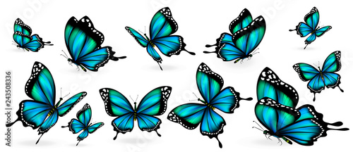 beautiful blue butterflies, isolated  on a white - 243508336