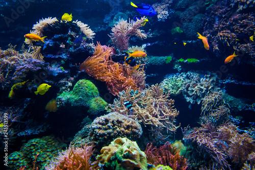 piękny podwodny świat