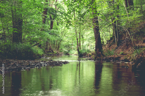 Cadres-photo bureau Rivière de la forêt A river crossing across a green forest
