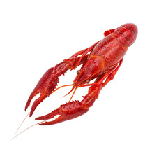 Fresh Boiled Red Crayfish, Isolated On White Background