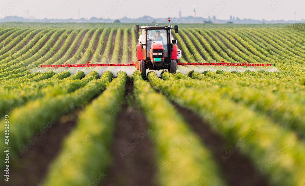 Fototapeta Tractor spraying pesticides at  soy bean field