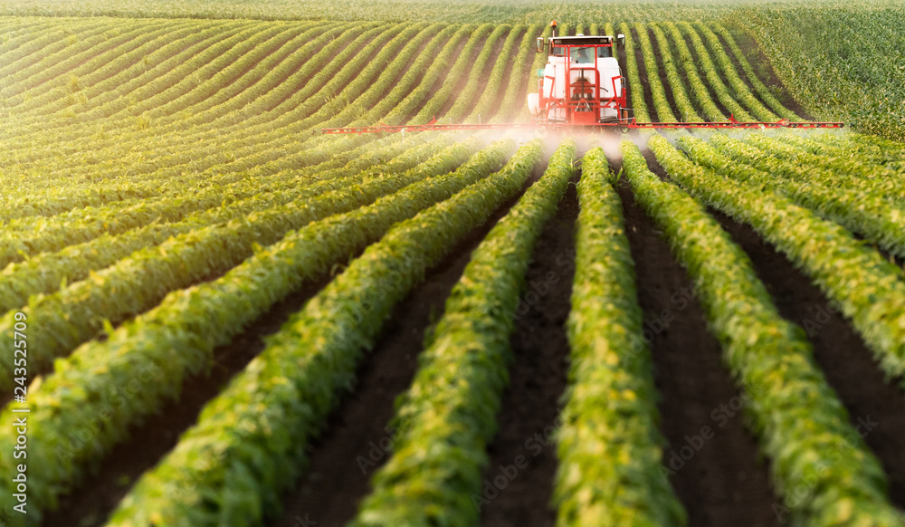 Fototapety, obrazy: Tractor spraying pesticides at  soy bean field