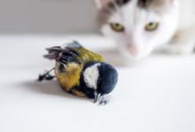 Domestic Cat Caught A Bird. Lu...