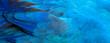Leinwandbild Motiv Parrot feathers blue exotic texture
