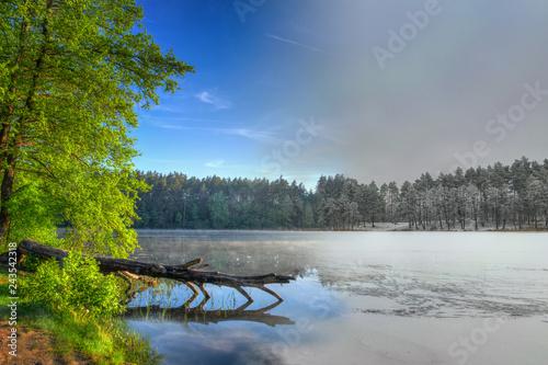 Fotografía  Winter spring combined photo of fallen tree. Masuria. Poland.