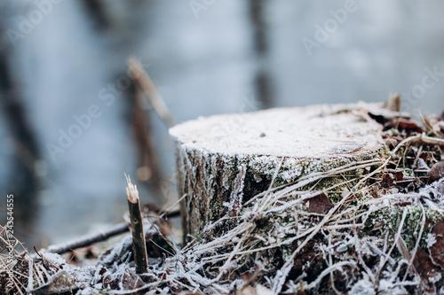 In de dag Tuin Frost stump near the river