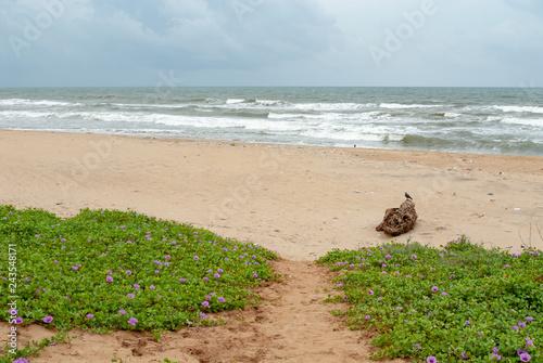 Fotografie, Obraz  Beach in Mamallapuram, Tamil Nadu, India