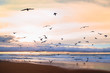 Beautiful sunset on the beach with flock of birds