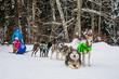 Husky dogs are pulling sledge with family at winter forest