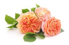 Bouquet Orange Roses.