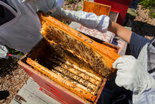 High Angle View Of Beekeepers Examining Honeycomb Frame At Apiary