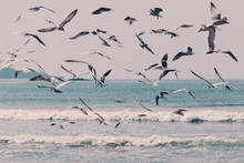 Large Group Of Seagulls Flying...