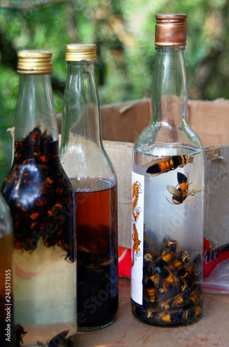 Fotografie, Obraz  Alcohol tincture of Asian giant hornet(Vespa mandarinia) - an ancient recipe of