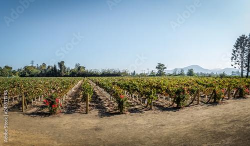 Cadres-photo bureau Amérique du Sud Chilean Vineyard - Santiago, Chile