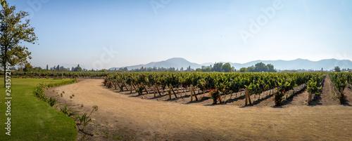 La pose en embrasure Amérique du Sud Chilean Vineyard - Santiago, Chile