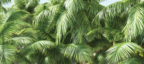 Photo  Coconut palm trees, beautiful tropical background, 3d illustration