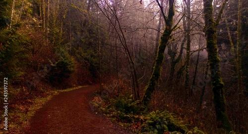 In de dag Bruin Winter on a Washington Trail