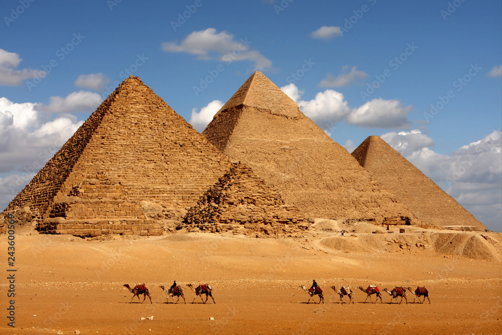 Fototapeta pyramids giza cairo in egypt with camel caravane panoramic scenic view