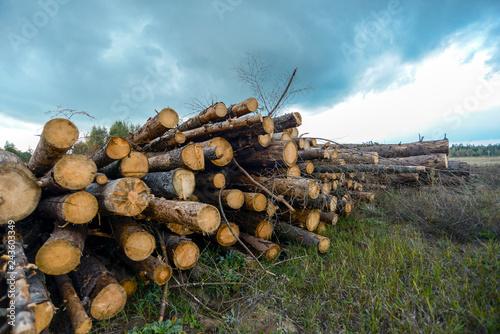 Fotografie, Obraz  many wood landscape