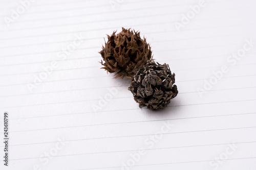Fotografie, Obraz  Pod, cone  or capsule on  background