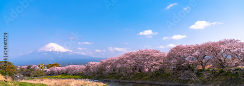 Ingelijste posters Kersenbloesem Ryuganbuchi in Fuji city, Shizuoka prefecture is one of popular cherry blossom & Mt.Fuji viewing spot. About 1 km Cherry blossoms line up along Sakurai river is very beautiful.