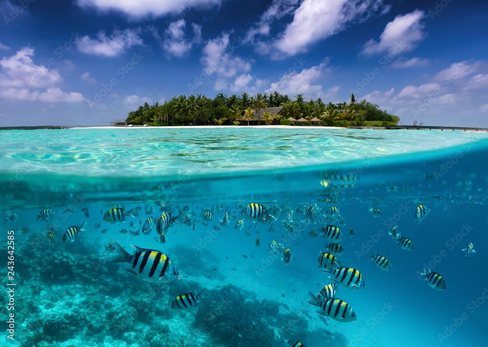 Fototapeta Tropische Insel auf den Malediven mit bunter Unterwasserwelt, Fischen, Korallen und blauem Himmel