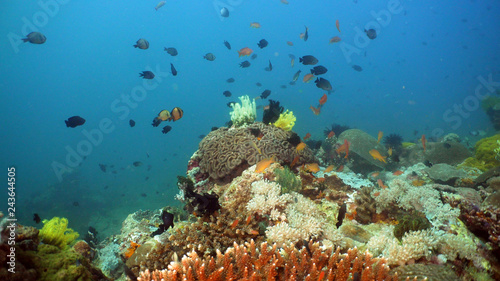 Poster Coral reefs Fish and coral reef at diving. Wonderful and beautiful underwater world with corals and tropical fish. Hard and soft corals. Philippines, Mindoro. Diving and snorkeling in the tropical sea.