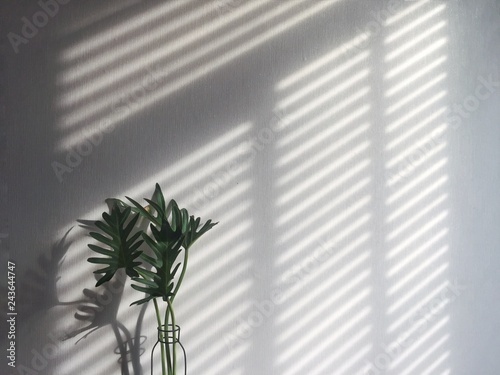 a shadow from wooden blind on white wall and vase of green fresh leaf in morning