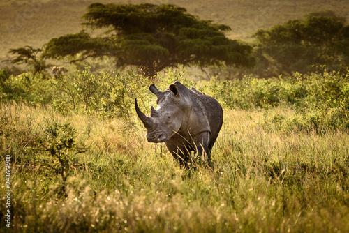 In de dag Neushoorn Breitmaul Nashorn in Hluhluwe-iMfolozi, Südafrika