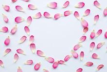 Lotus Petals On White