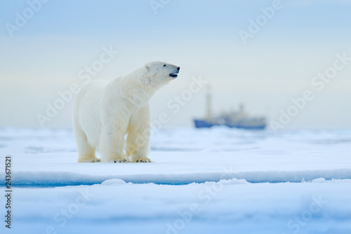 In de dag Ijsbeer Bear and boat. Polar bear on drifting ice with snow, blurred cruise vessel in background, Svalbard, Norway. Wildlife scene in the nature. Cold winter with vessel. Arctic wild animals in snow and ship.