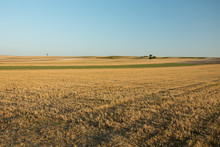 Huge Stubble Field, Horizon And Clear Sky