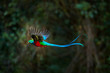 canvas print picture - Flying Resplendent Quetzal, Pharomachrus mocinno, Costa Rica, with green forest in background. Magnificent sacred green and red bird. Action flight moment with Quetzal, beautiful exotic tropic bird.