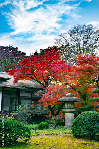 Photo  Traditional japanese house with red autumn leaves and stone lantern in a yard (J