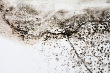 Black Mold On A White Wall In ...