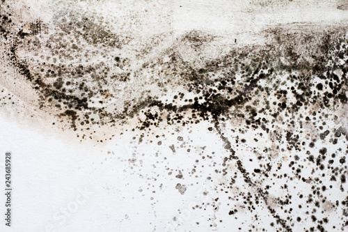 Black mold on a white wall in the house. Canvas Print