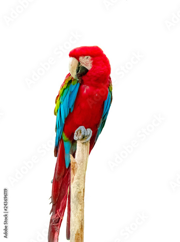 Macaw parrot isolated on white background Canvas Print