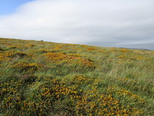 Moorland Flowers With Clouds