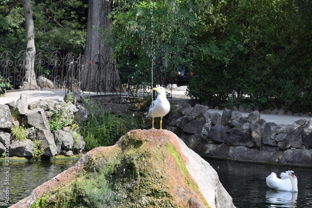 Грациозная чайка пьет воду из фонтана в жаркий летний день